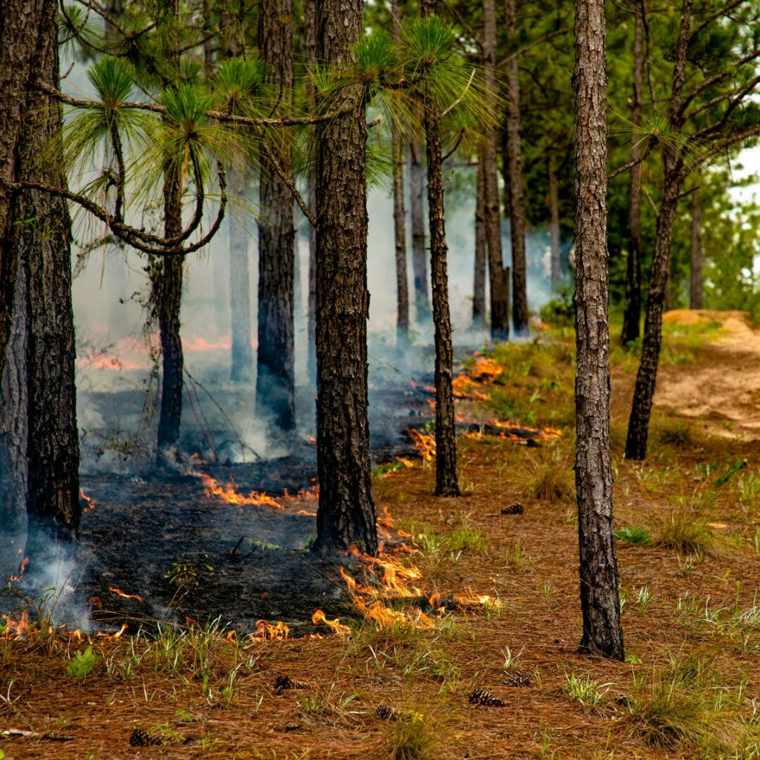 What is Prescribed Fire?